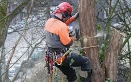 Спил, удаление, кронирование деревьев