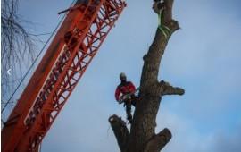 Спил и обрезка аварийных деревьев