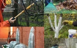 Обрезка деревьев, Спил, Вспашка
